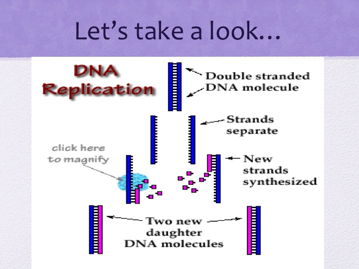 DNA worksheet doc also Pedigree Worksheet Middle With Answers besides What Do The Letters Dna Stand For Worksheet   Letterjdi org as well Dna Worksheet Answers Mr Hoyle   Free Worksheet Printables moreover  as well Dna Diagram Worksheet   Online Wiring Diagram as well Dna Replication Coloring Sheet Key   mountainstyle co moreover  in addition The Letters Dna Stand For Worksheet Answers   mamiihondenk org also Mutations Worksheet   Homedressage further Awesome Collection Of Biology Mr Hoyle Dna Worksheet Images together with Dna Fingerprinting Worksheet Answer Key Fresh 15 1 3 Study Guide Ans also October as well DNA   The Double Helix  Coloring Worksheet as well Unit 5   DNA   Protein Synthesis   Connelly's House furthermore Dna And Rna Worksheet Answers   Oaklandeffect. on biology mr hoyle dna worksheet